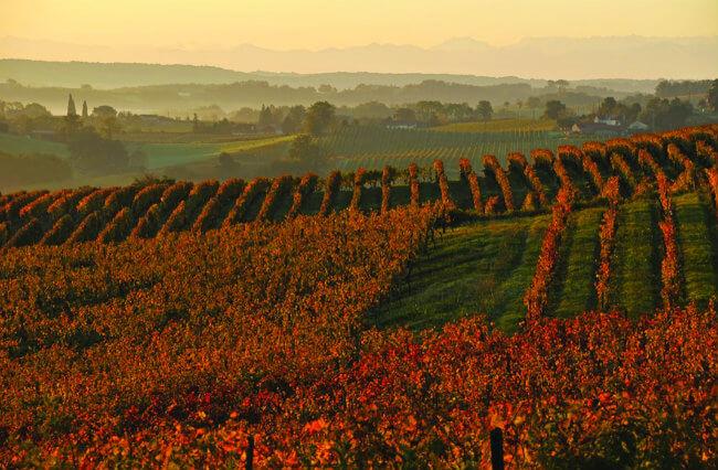 Tìm hiểu vùng rượu mạnh Armagnac của Pháp